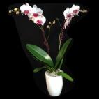 Pot pour plantes aromatiques