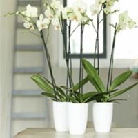 Vases, pots et cache-pots